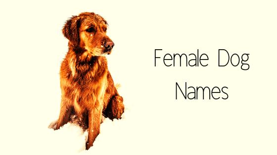 how to chose female dog names